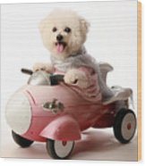 Fifi The Bichon Frise And Her Rocket Car Wood Print