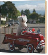 Fifi The Bichon Frise To The Rescue Wood Print