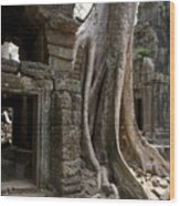Fig Tree Growing Over Crumbling Ruins Wood Print