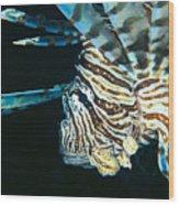 Fiji, Lionfish Wood Print