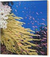 Fijian Reef Scene Wood Print