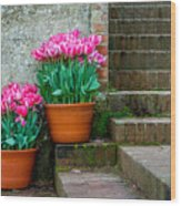 Filoli Tulips Wood Print