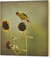 Finch 1 Wood Print