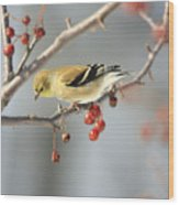 Finch Eyeing Seeds Wood Print