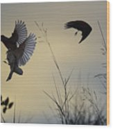 Finches Silhouette With Leaves 5 Wood Print