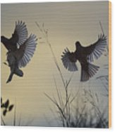 Finches Silhouette With Leaves 6 Wood Print