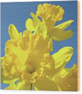 Fine Art Daffodils Floral Spring Flowers Art Prints Canvas Baslee Troutman Wood Print