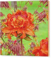 Fine Art Floral Art Prints Canvas Orange Rhodies Baslee Troutman Wood Print