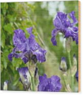 Fine Art Floral Prints Purple Iris Flowers Canvas Irises Baslee Troutman Wood Print
