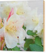 Fine Art Florals Prints White Pink Rhodies Rhododendrons Baslee Troutman Wood Print