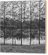 Fine Trees Wood Print
