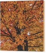 Fine Wine Cafe Golden Tree Wood Print