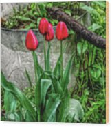 Fine Wine Cafe Red Tulips Wood Print