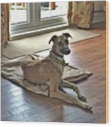Finly - Ava The Saluki's New Companion Wood Print