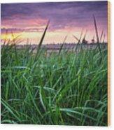 Finn Line Grass Wood Print