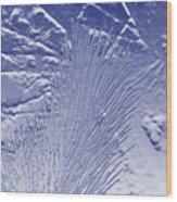Fir In Blue Wood Print
