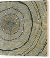 Fir Wood Print