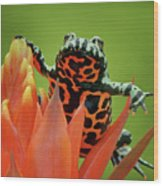 Fire-bellied Toad Wood Print