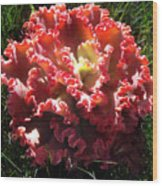 Fire Color Succulent. Curly Plant, Exotic Wood Print