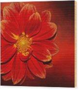 Fire Dahlia By Kaye Menner Wood Print