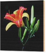 Fire Lily 2 Wood Print