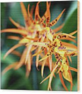 Fire Orchid Wood Print