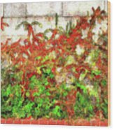 Fire Thorn - Pyracantha Wood Print