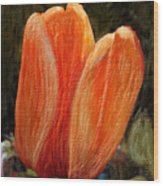 Fire Tulip Wood Print