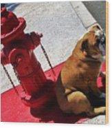 Fireplug Bulldog Wood Print