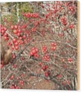Firethorn Bushes Wood Print