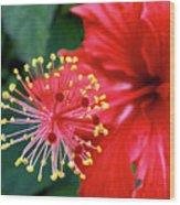 Fireworks - Hibiscus Wood Print