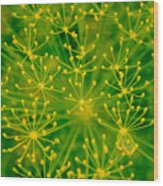 Fireworks Of Dill Flowers Wood Print
