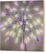 Fireworks  Wildflowers Wood Print