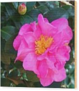 Firey Pink Camelia Wood Print