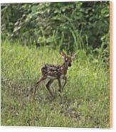 First Baby Fawn Of The Year Wood Print
