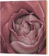 First Bloom  Wood Print