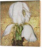 First Iris Wood Print