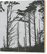 First Line Trees Along The Pacific Ocean Wood Print