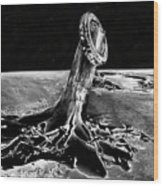 First Men On The Moon Wood Print