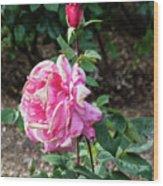 First Prize Rose Hybrid Tea Wood Print