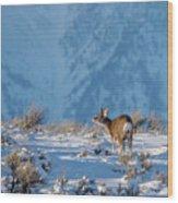 First Rut Mule Deer Buck Wood Print