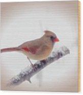 First Snow - Female Cardinal Bird With Vignette Wood Print