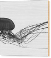 Fish 28 Wood Print