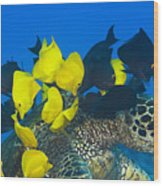 Fish Cleaning Turtle Wood Print by Dave Fleetham - Printscapes