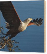 Fish Eagle Taking Flight Wood Print