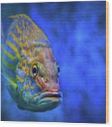 Fish Frown Story Wood Print