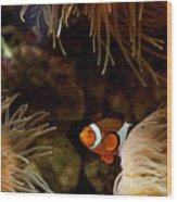 Fish In Sea Anemones Aquarium Wood Print