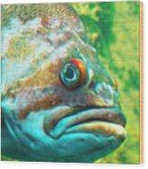 Fish Looking At You Wood Print