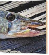 Fish Mouth Wood Print