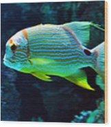 Fish No.3 Wood Print